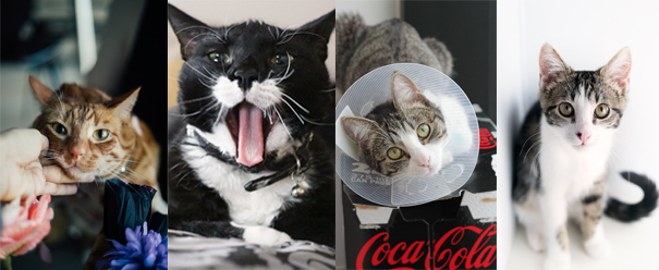 CATS-COLLAGE