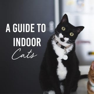 The Cat Lady's Guide To Caring For Indoor Cats
